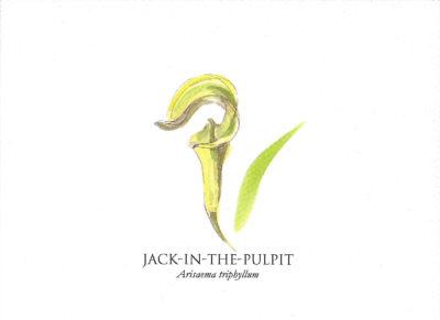 jackinthepulpit