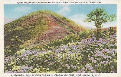 Craggy Gardens Postcard