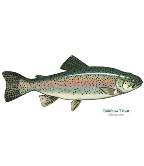 trout-main